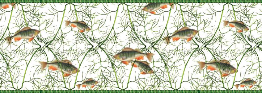 Fisch an Dill Tapete statt Aquarium
