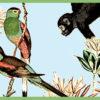 Tierische Monkey Tapetenborte