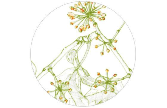 """Frische Garten Tapete """"Ivy"""""""