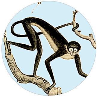 Dschungel Tapete: Monkey Retro Urwald Vliestapete mit Affen
