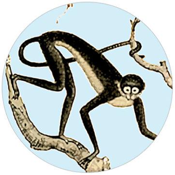 Dschungel Tapete: Monkey